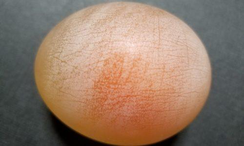 酢で卵の殻を溶かす自由研究